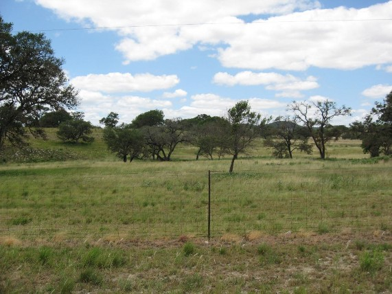 Example_Edwards_Plateau_Savanna_Grassland.jpg