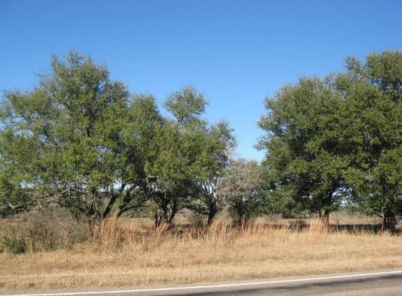 Example_Llano_Uplift_Live_Oak_Woodland.jpg
