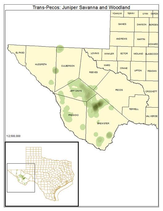 Trans-Pecos: Juniper Savanna and Woodland