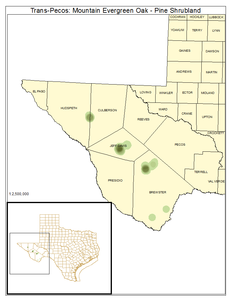 Trans-Pecos: Mountain Evergreen Oak - Pine Shrubland