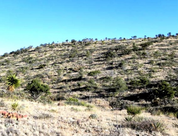 Example_Trans_Pecos_Mountain_Evergreen_Oak_Pine_Shrubland.jpg