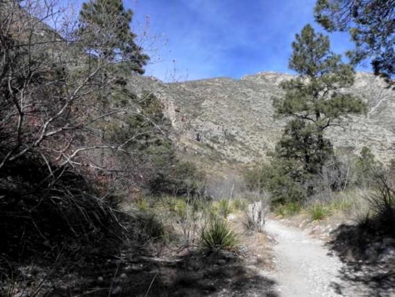 Example_Trans_Pecos_Ponderosa_Arizona_Pine_Oak_Woodland.jpg