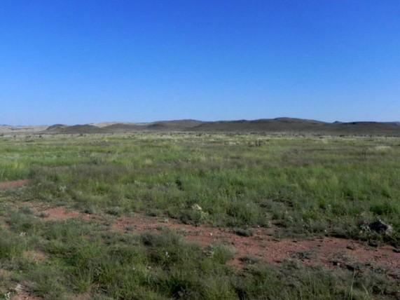 Example Trans-Pecos Loamy Plains Grassland.jpg