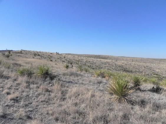 Example Trans-Pecos Shallow Plains Grassland.jpg