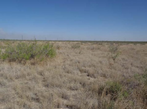 Example Trans-Pecos Sandy Desert Grassland.jpg
