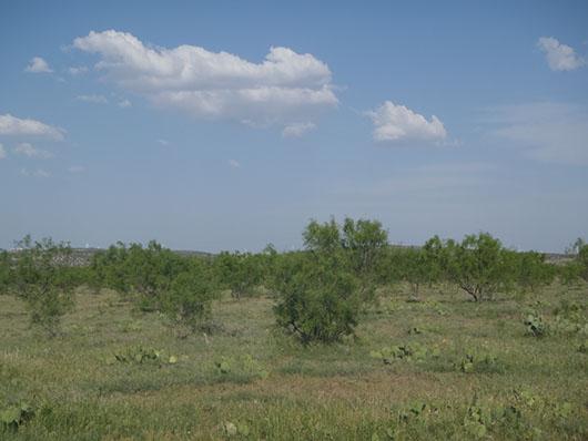 southwest-tobosa mesquite shrubland-521.jpg