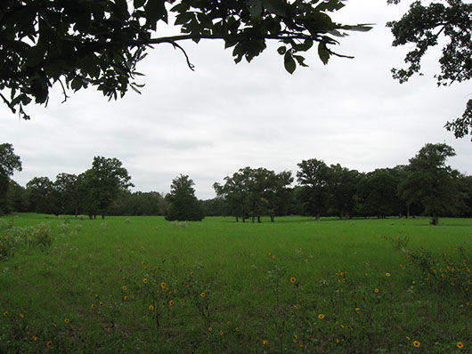 post_oak_savanna_sandyland_grassland_site19.jpg