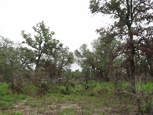 postoaksavanna_xericsandylands_woodland_site21.jpg