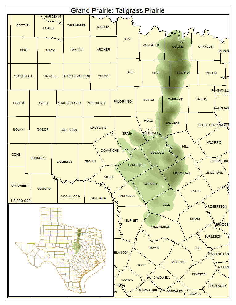 Grand Prairie: Tallgrass Prairie