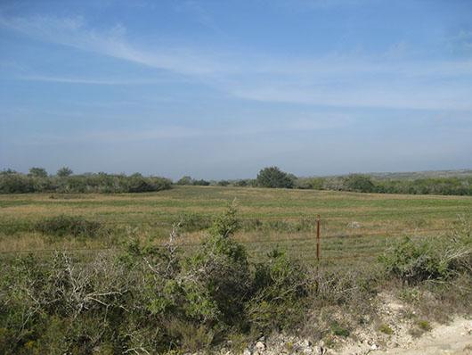 south texas-caliche grassland-1050.jpg