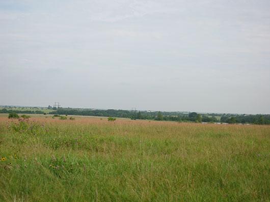 blackland_tallgrass_prairie_site2273.jpg