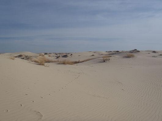 active sand dune-223a.jpg
