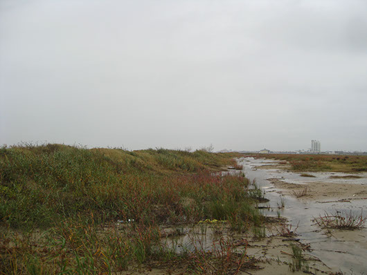 coastal and sandsheet-deep sand shrubland-1710.jpg