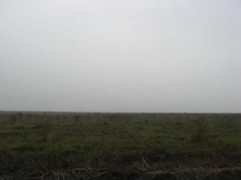 Example Gulf Coast: Salty Prairie Shrubland.jpg