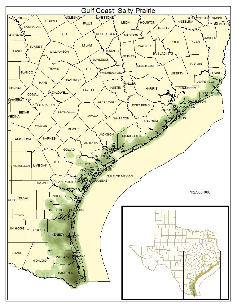 Gulf Coast: Salty Prairie