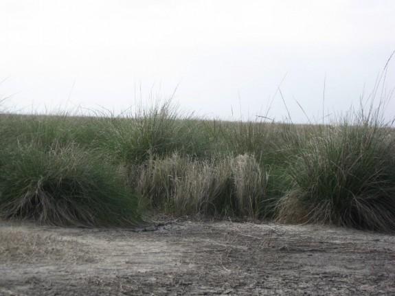Example Gulf Coast: Salty Prairie.jpg