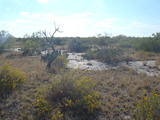 inland salty prairie-978.jpg