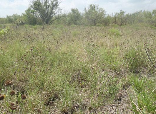 inland-salty prairie-781 (2).jpg
