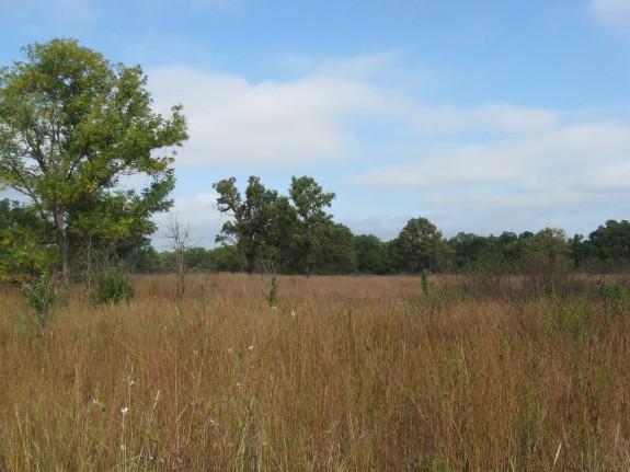 Example Pineywoods: Southern Calcareous Mixedgrass Prairie.jpg
