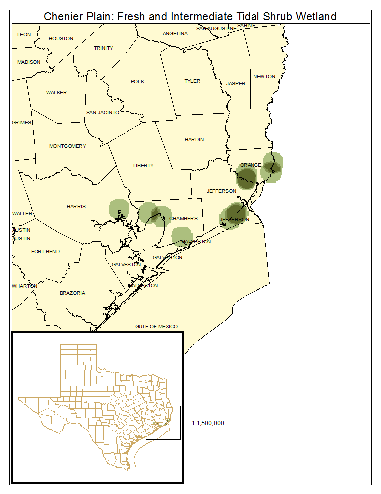 Chenier Plain: Fresh and Intermediate Tidal Shrub Wetland