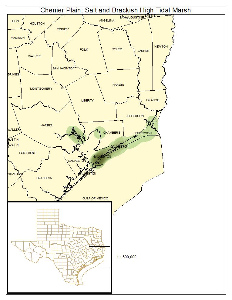Chenier Plain: Salt and Brackish High Tidal Marsh