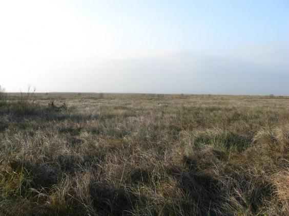 Example Chenier Plain: Salt and Brackish High Tidal Marsh.jpg