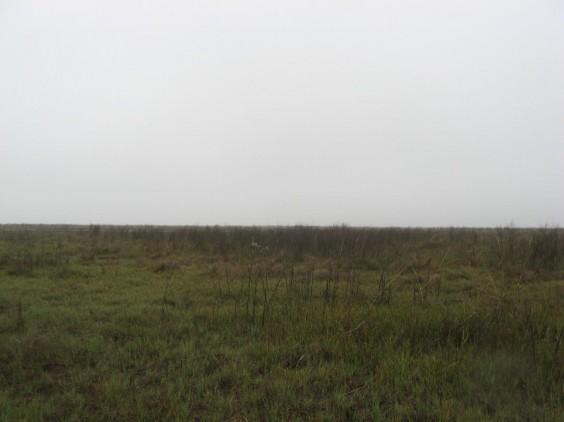 Example Chenier Plain: Salt and Brackish High Tidal Shrub Wetland.jpg