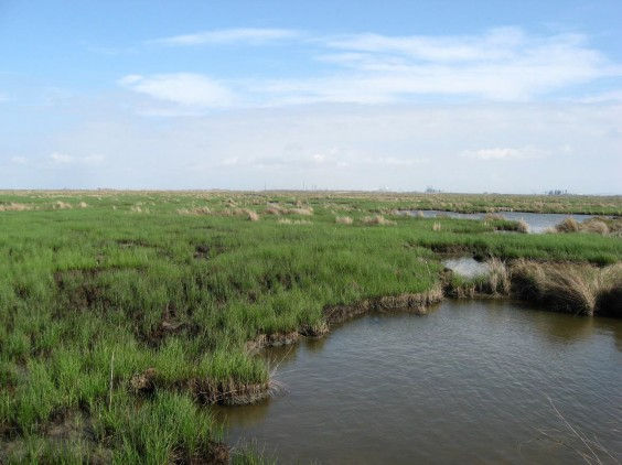 Example Chenier Plain: Salt and Brackish Low Tidal Marsh.jpg