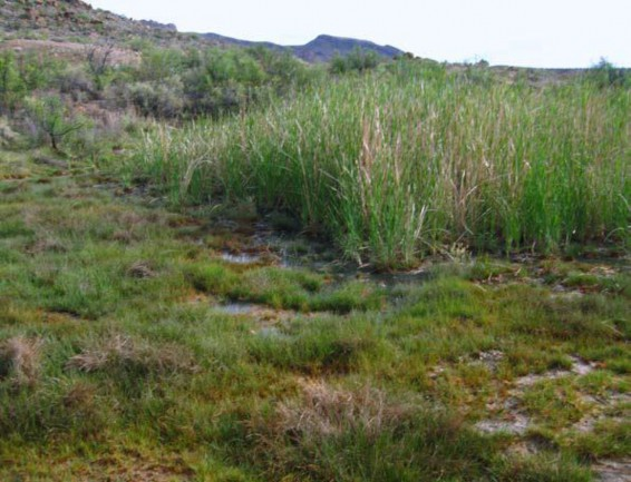 North American Arid West Emergent Marsh Texas Parks