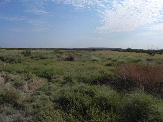 trans pecos-cienaga wetland desert-1013c.jpg