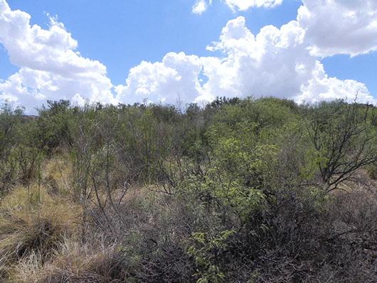 trans pecos-cienaga shrub desert-777.jpg