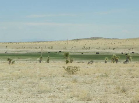 Example Trans-Pecos: Desert Playa Grassland.jpg