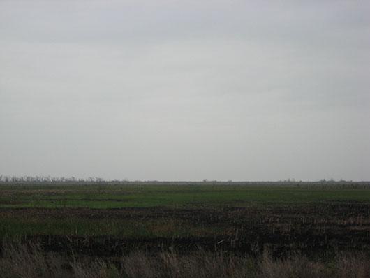 coastal-fresh and intermediate tidal marsh-1006.jpg