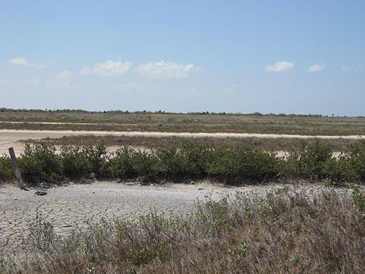 coastal-mangrove shrubland-404.jpg