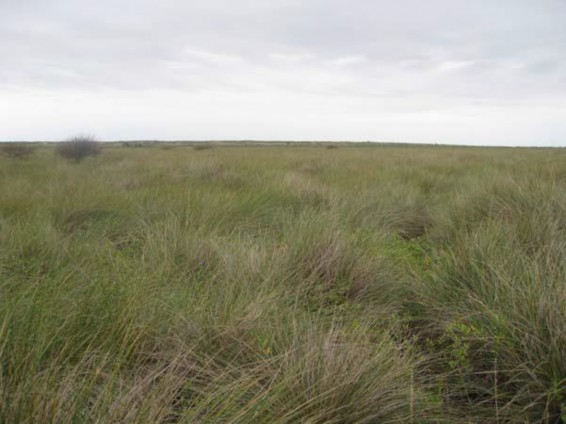 Example Coastal: Salt and Brackish High Tidal Marsh.jpg