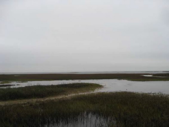 Example Coastal: Salt and Brackish Low Tidal Marsh.jpg