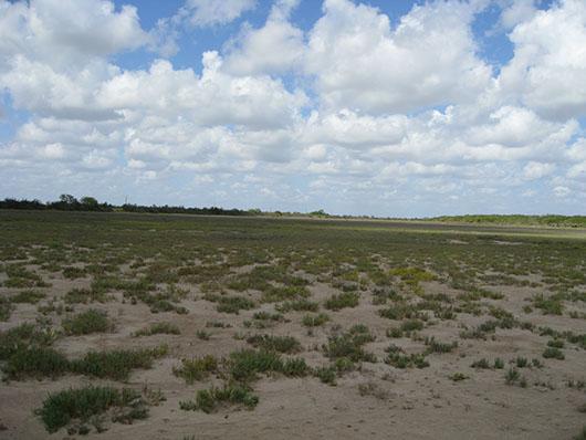 coastal-tidal flat-393.jpg