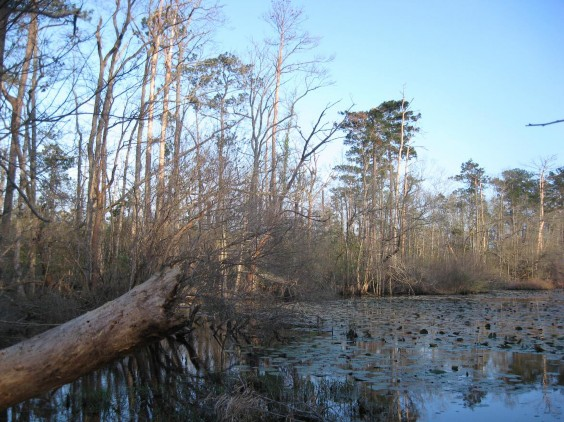 West Gulf Coastal Plain Flatwoods Pond Texas Parks