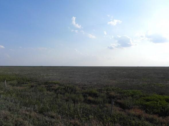 Example High Plains: Playa Grassland.jpg