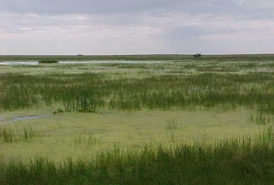 Example High Plains: Playa Marsh.jpg