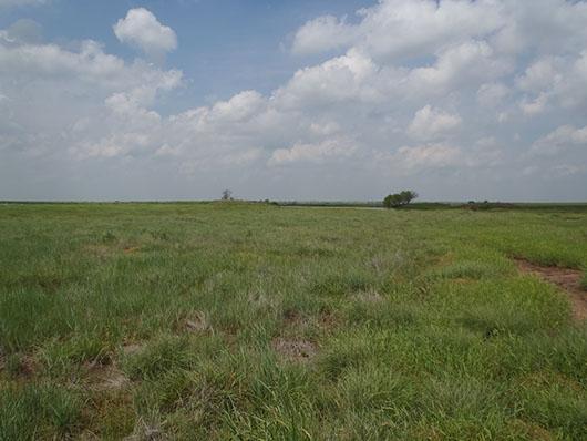high plains-alkali sacaton grassland-321.jpg