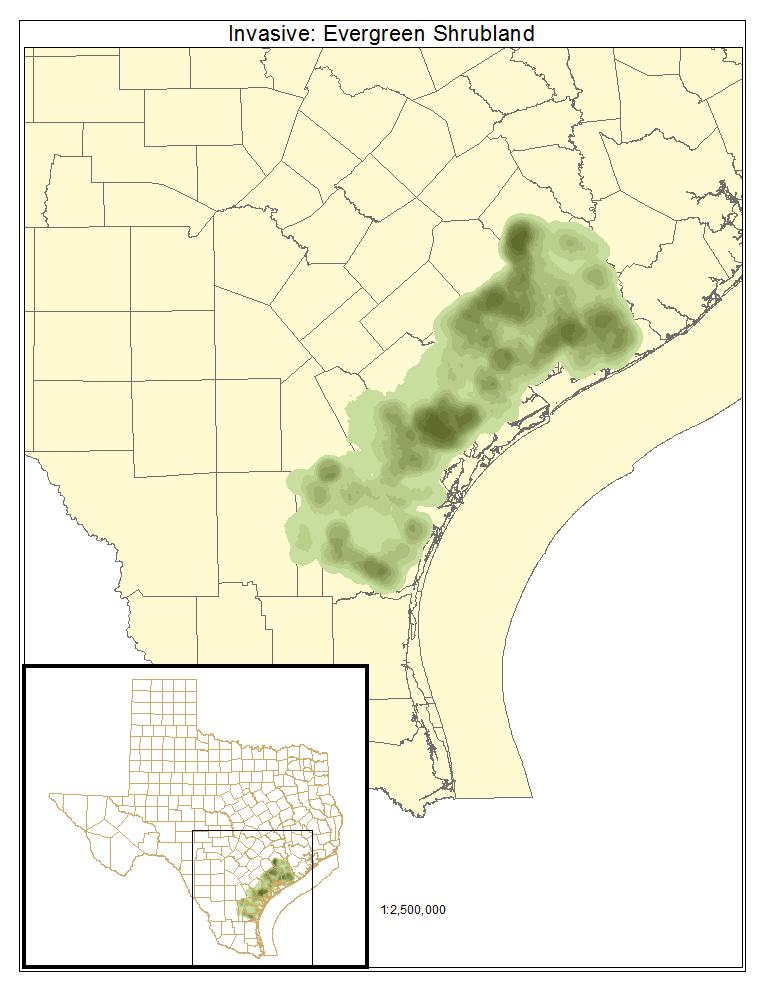 Invasive: Evergreen Shrubland