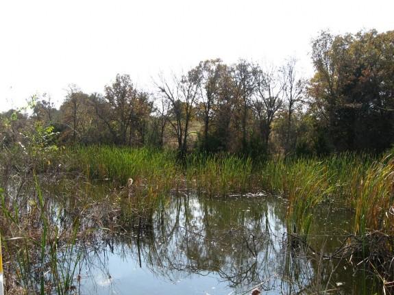 Example Marsh.jpg