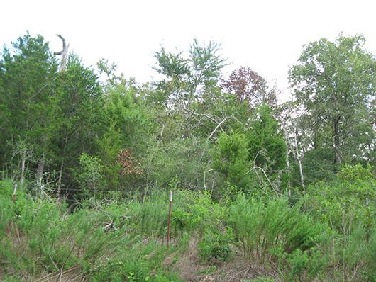 native invasive-deciduous woodland-160.jpg
