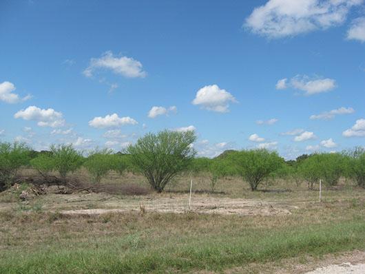 native invasive-huisache woodland or shrubland-113.jpg
