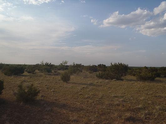 native invasive-juniper shrubland-531.jpg