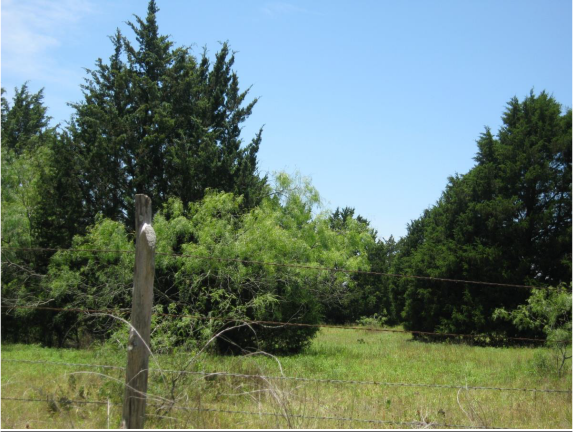 Example Native Invasive: Juniper Woodland.png