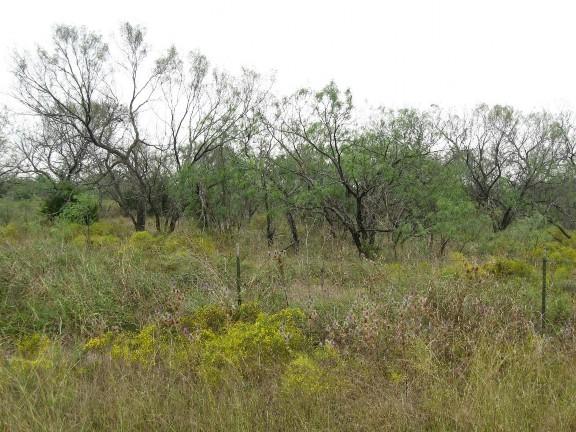 Example Native Invasive: Mesquite Woodland.jpg