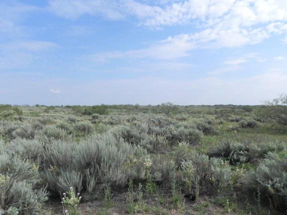 Example Native Invasive: Sand Sagebrush Shrubland.jpg