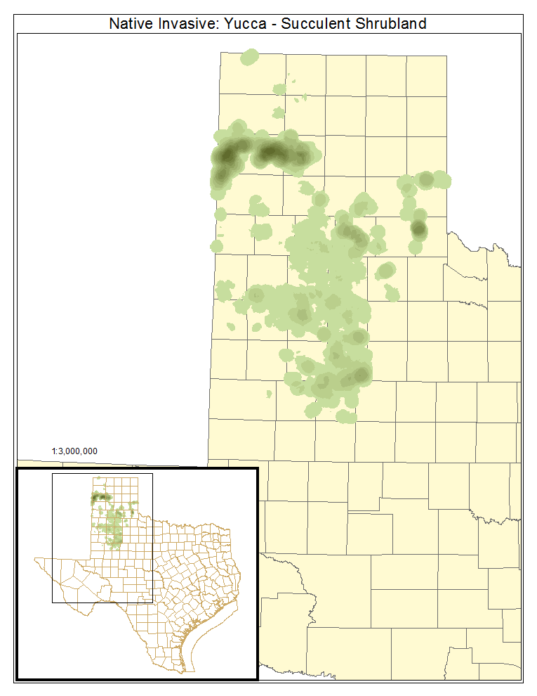 Native Invasive: Yucca - Succulent Shrubland